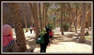 wadishab1